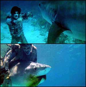 """Zombie Sharks"" not to be confused with ""shark vs. zombie"" from Fulci's classic film ""Zombie."""